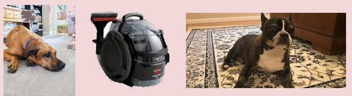 Carpet Cleaning for Pets 2019