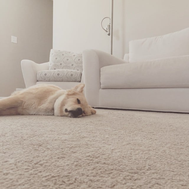 Puppy Sleeping on the carpet