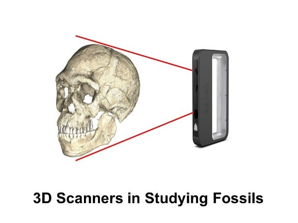 3D scanning a fossil